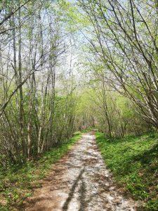 bosco sentiero Girolamo Segato